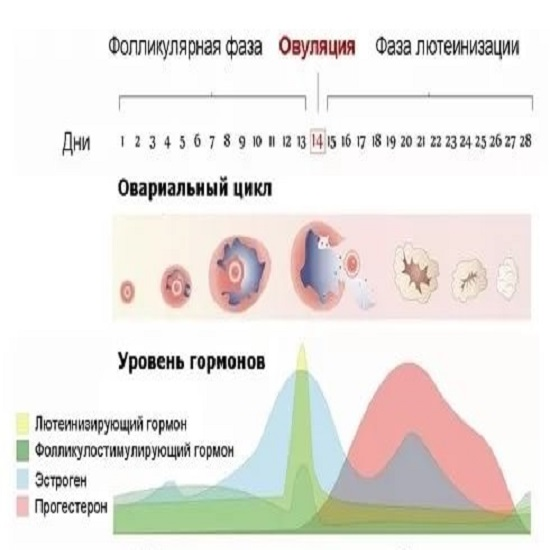 естественные методы контрацепции
